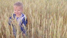 Muchacho joven feliz que va en campo con trigo en el día soleado concepto de pequeño granjero Cámara lenta almacen de video
