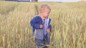 Muchacho joven feliz que va en campo con trigo en el día soleado concepto de pequeño granjero Cámara lenta metrajes