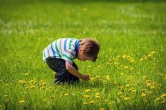 Muchacho joven fuera de escoger una flor del diente de león Fotografía de archivo