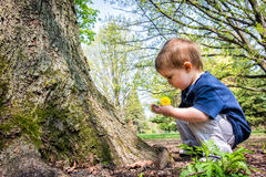 Muchacho joven que mira la ramita en sus manos Imágenes de archivo libres de regalías