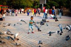 Muchacho joven que persigue después de palomas en la India en un mes de invierno del verano foto de archivo libre de regalías