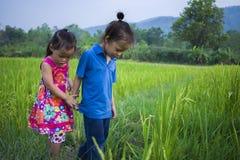 Muchacho largo y ni?a del pelo que juegan en campo del arroz y una muchacha ella asust? un fangoso imagen de archivo