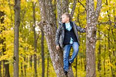 Muchacho lindo del adolescente que se sienta en una rama del árbol en parque del otoño Imagen de archivo libre de regalías