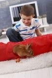 Muchacho lindo que juega con el conejito del animal doméstico Fotos de archivo