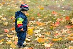 Muchacho lindo y hojas que caen Imágenes de archivo libres de regalías