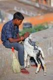 Muchacho local que se sienta en una pared de piedra con una cabra, Jaipur, Rajasthán Fotografía de archivo libre de regalías