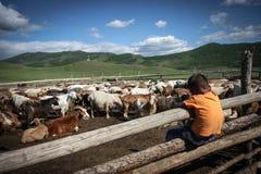 Muchacho mongol que se sienta en la cerca Foto de archivo