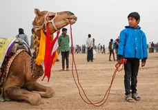 Muchacho no identificado que sostiene el freno de un camello grande Fotografía de archivo libre de regalías