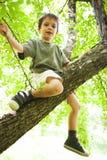 Muchacho orgulloso ascendente en árbol Imagen de archivo libre de regalías