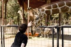 Muchacho que acaricia la jirafa Foto de archivo