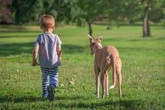 Muchacho que camina con un perro en un parque Imagen de archivo