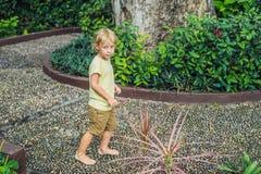 Muchacho que camina en un pavimento de adoquín texturizado, Reflexology Piedras del guijarro en el pavimento para el reflexology  Imagen de archivo libre de regalías