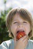 Muchacho que come el tomate en jardín Imágenes de archivo libres de regalías