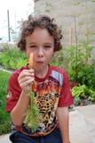 Muchacho que come la zanahoria de cosecha propia Imagenes de archivo