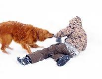 Muchacho que juega con el perro en la nieve Fotografía de archivo libre de regalías