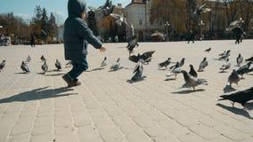 Muchacho que juega con las palomas de la ciudad almacen de video