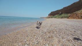 Muchacho que juega con un perro en la playa, lanzando