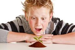 Muchacho que mira una pequeña planta en suelo Imágenes de archivo libres de regalías