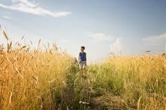 Muchacho que recorre a través de campo de trigo de oro Imagen de archivo