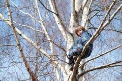 Muchacho que se sienta en el árbol Imágenes de archivo libres de regalías