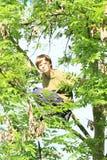 Muchacho que se sienta en el árbol Foto de archivo