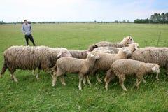 Muchacho que vigila multitud del ganado Fotos de archivo