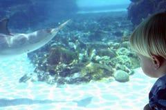 Muchacho rubio que mira el delfín el parque zoológico Imagen de archivo