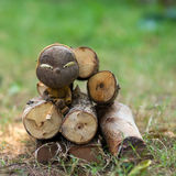 Muchacho sucio en un registro de la madera Fotografía de archivo libre de regalías