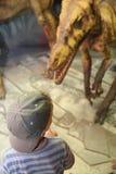Muchacho y dinosaurio en museo Imagen de archivo