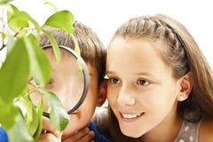 Muchacho y muchacha que miran una planta a través de una lupa Fotos de archivo libres de regalías
