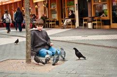 Muchacho y palomas Imagen de archivo libre de regalías