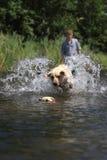 Muchacho y perro que juegan alcance Imágenes de archivo libres de regalías