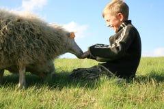 Muchacho y sheeps Fotografía de archivo libre de regalías