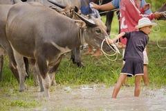 Muchacho y su búfalo Fotos de archivo