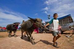 Muchacho y su búfalo Imagen de archivo