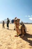 Muchachos con un camello Fotografía de archivo