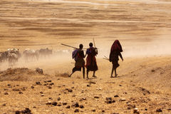 Muchachos de Massai que conducen vacas al agua de la bebida Imagen de archivo libre de regalías