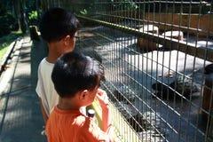 Muchachos en el parque zoológico Imagen de archivo libre de regalías