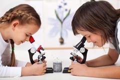 Muchachos en muestras del estudio de laboratorio de ciencia debajo del microscopio-foc Imagenes de archivo