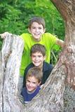 Muchachos en un árbol Foto de archivo libre de regalías