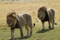 Muchachos grandes africanos Imágenes de archivo libres de regalías