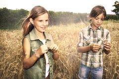 Muchachos jovenes que se divierten en el campo de trigo Fotos de archivo libres de regalías