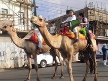 Muchachos musulmanes en el montar a caballo del camello en Nairobi Imagenes de archivo