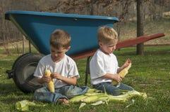 Muchachos que limpian maíz Imágenes de archivo libres de regalías