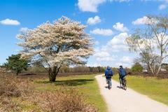 Muchachos que montan en bicicleta en la pista para bicicletas del brezo en la primavera, Países Bajos Fotos de archivo libres de regalías