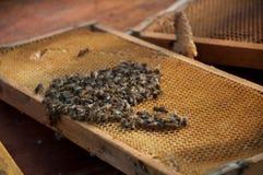 Muchas abejas Foto de archivo libre de regalías