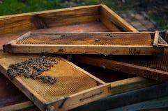 Muchas abejas Foto de archivo