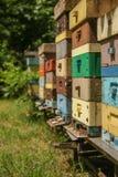 Muchas abejas en beevives Imagen de archivo libre de regalías