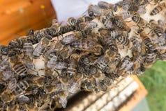 Muchas abejas en colmena Imagenes de archivo