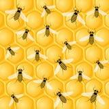 Muchas abejas en el panal Imágenes de archivo libres de regalías